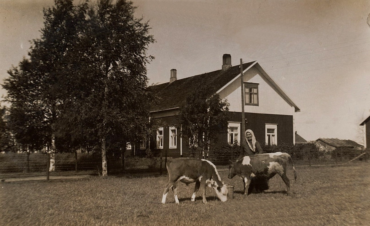 På fotot Ana-Kajs som matar kalvarna framför Nyströms gård.