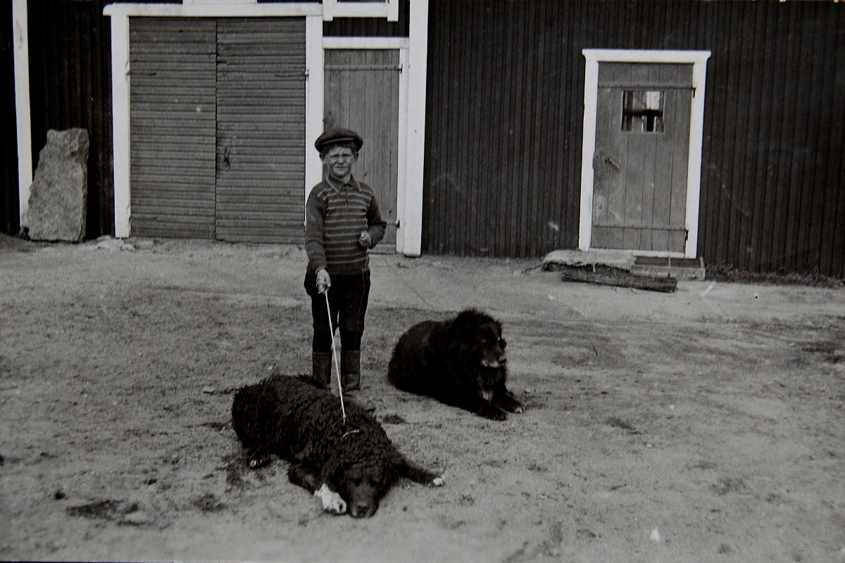 """Den unga pojken på bilden är """"Bagar-Arne"""", alltså Annas son med de båda hundarna."""