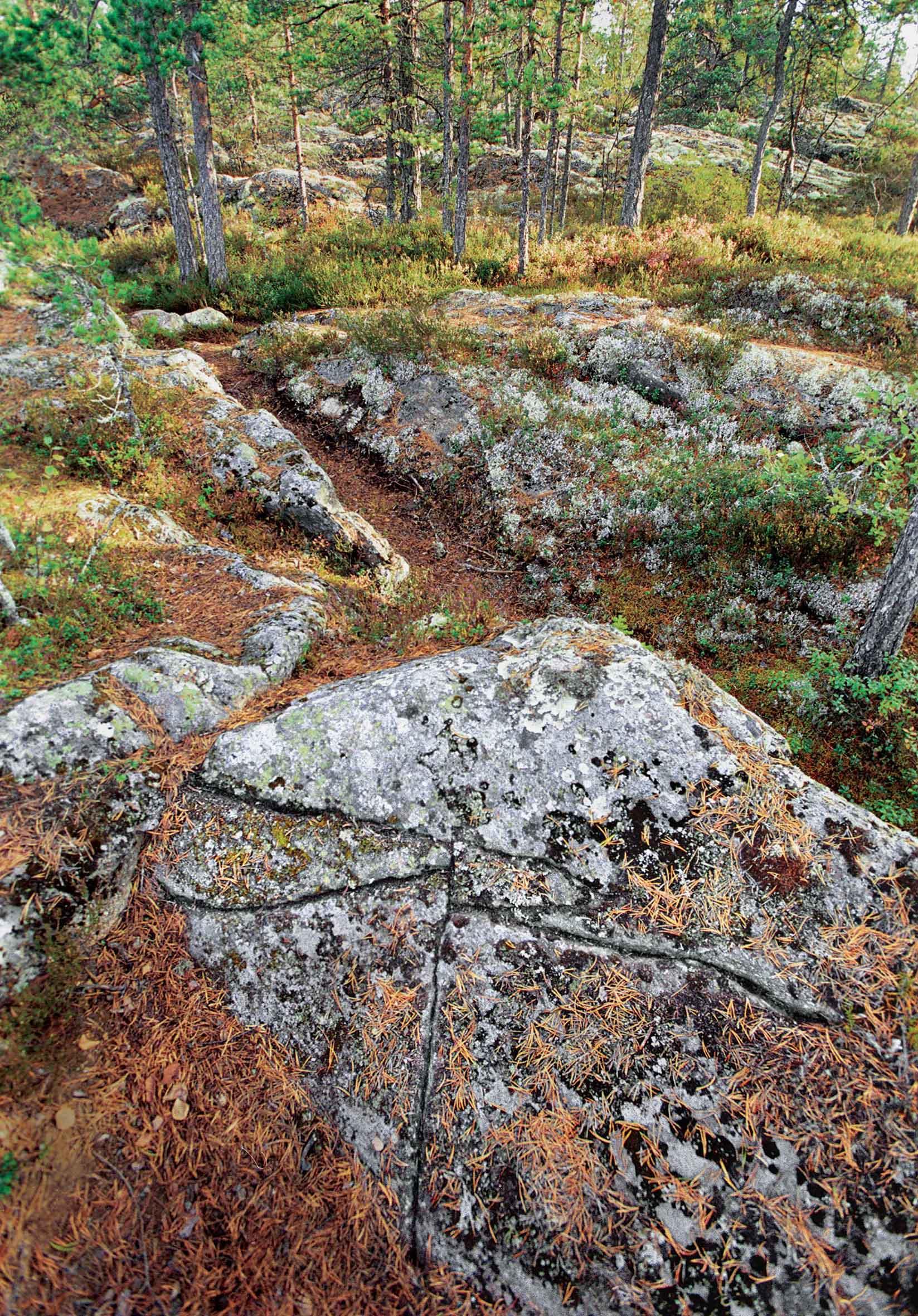 Den här inristade kompassen hittade Lars Ålgars på en klippa som var täckt av mossa i närheten av Bastuväggen på Bötombergen. Foto Mikael Herrgård.