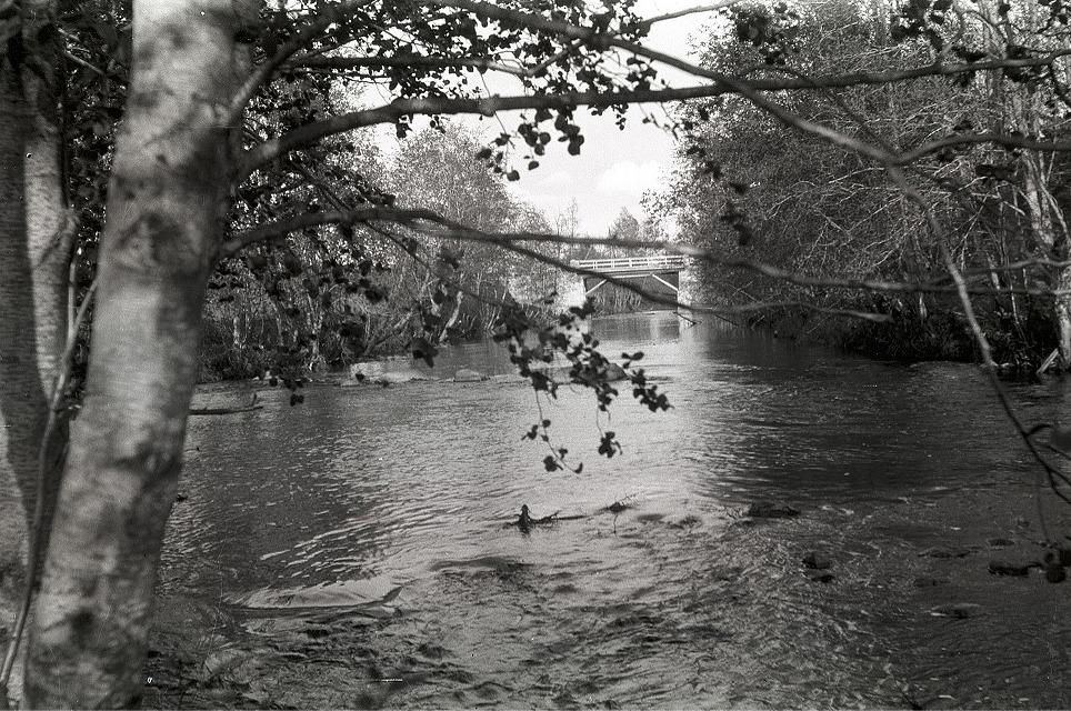 Vegetationen är tät utefter Lillån och på denna bild så ser man att läraren Selim Björses har haft svårigheter att få någon bild av bron.