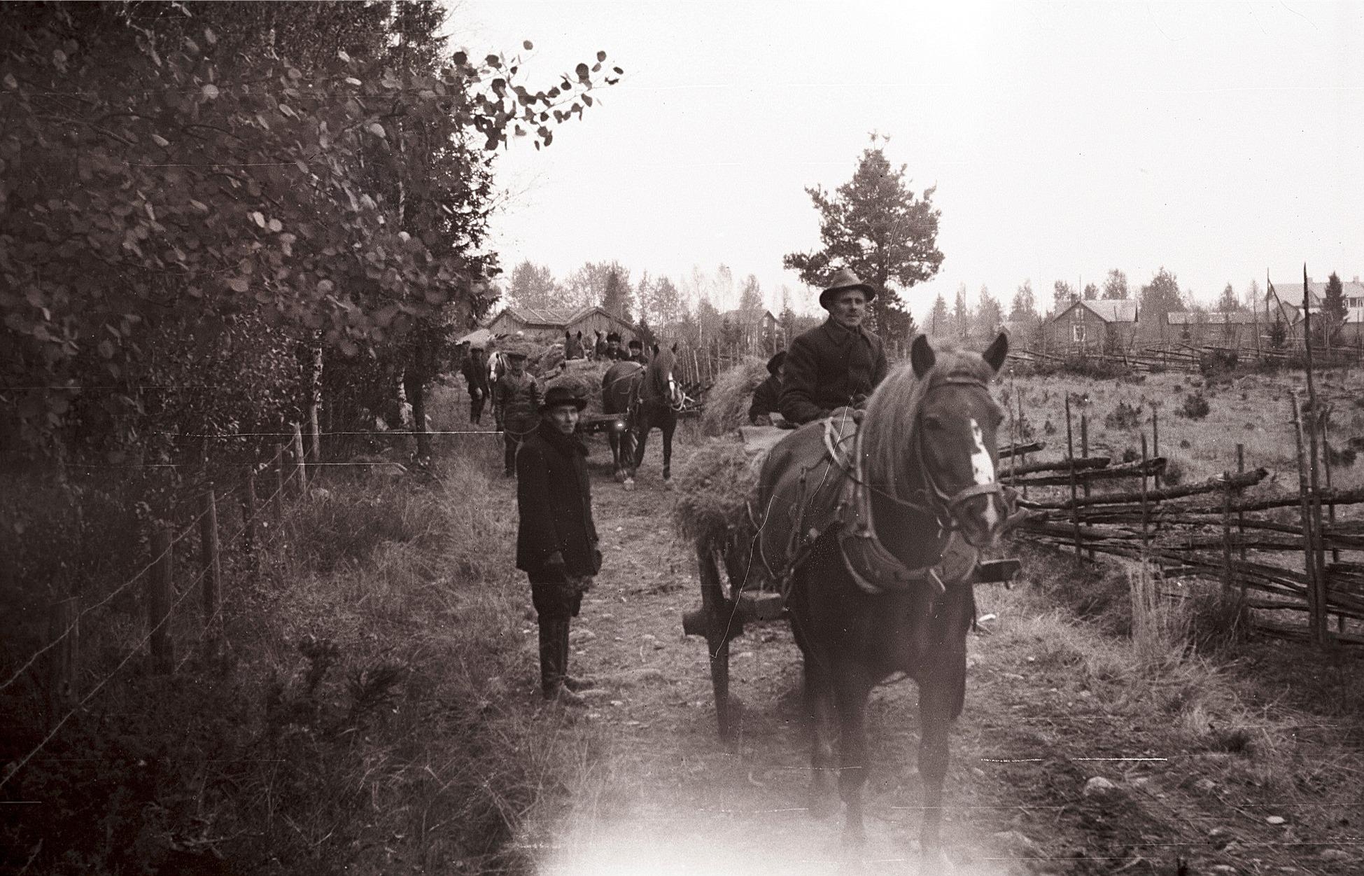 Här ser vi hästar på väg till inskrivningen på kyrkbacken i Lappfjärd. Enligt bestämmelserna skulle hästarna medföra åtminstone 50 kg hö och 15 kg havre. De skulle vara välskodda och ha ordentliga seldon. Därtill var det en massa verktyg som skulle finnas med, bland annat en yxa, ett järnspett och en skyffel. Ett ämbare och hästtäcke som skulle medföras varje häst.