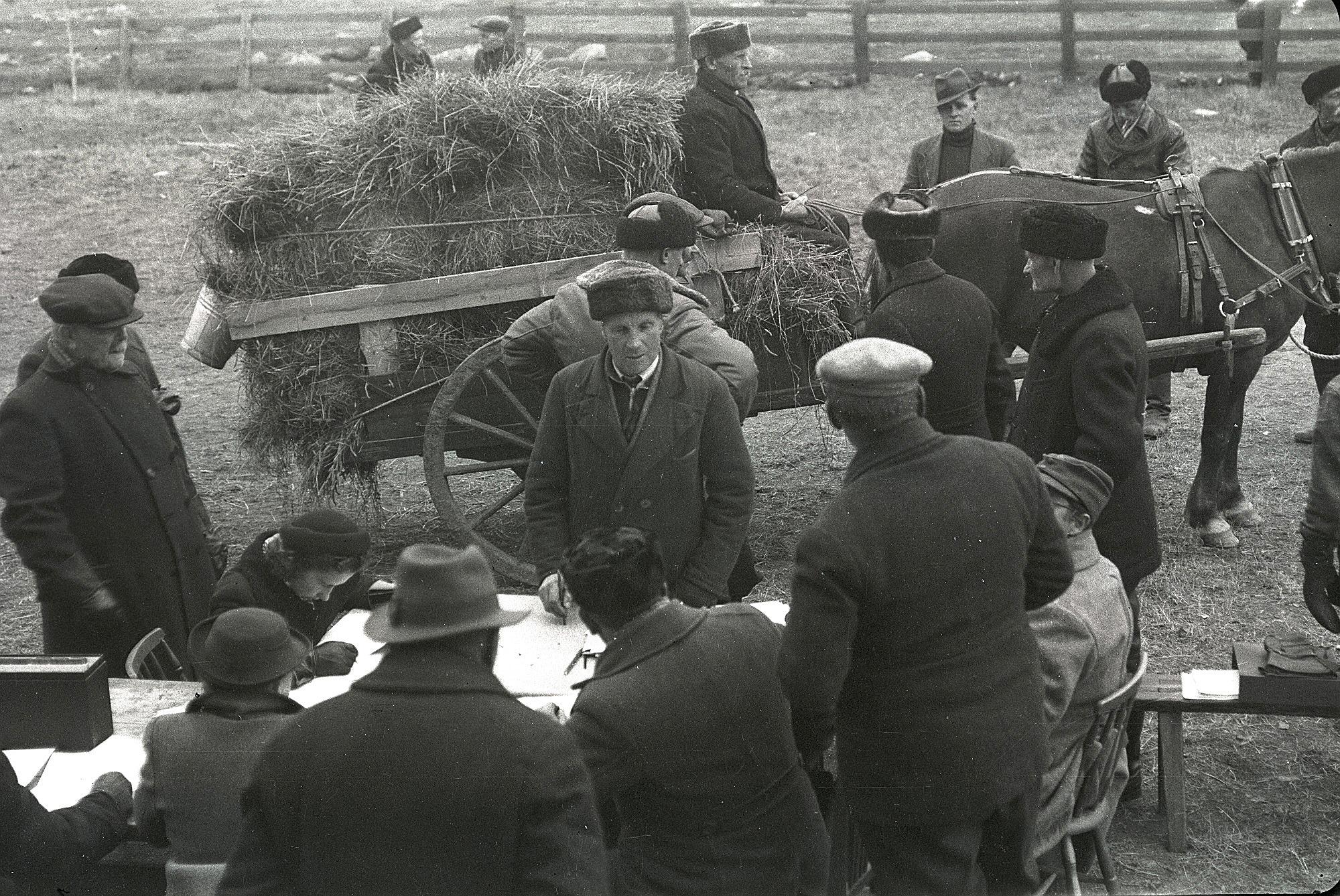 Vi kan bara ana vad den bistra mannen på hästkärran tänker på. Hästen är tillsvidare lyckligt omedveten om vad som väntar. Selim Björses foto från 1939 finns arkiverat på SLS:s traditionsarkiv i Vasa.