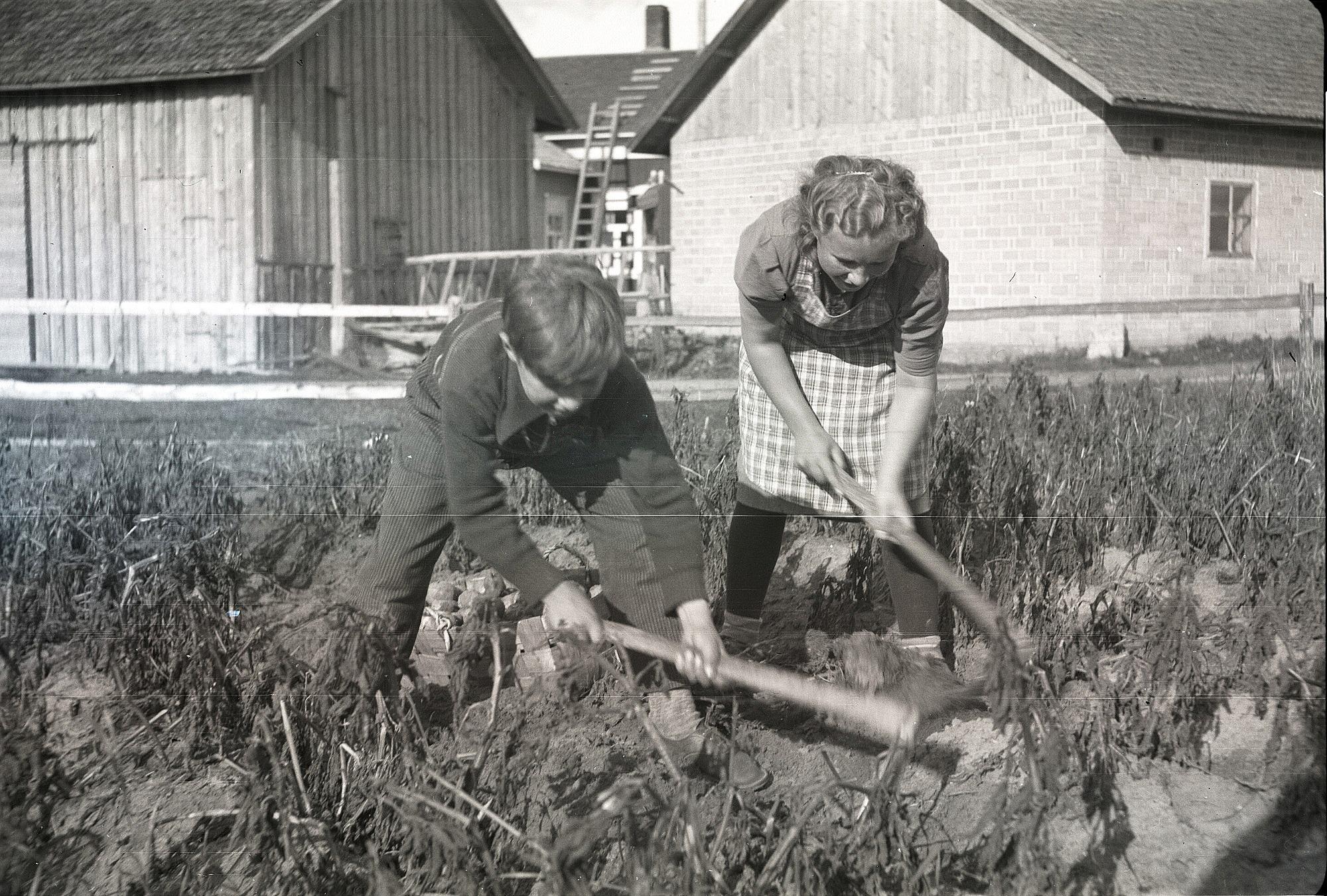 """På Selim Björses foto så ser vi Dagny Nyberg och Åke Berglind med """"pärongräftor"""". Åke Berglind (f. 1928) son till Almas bror Viktor Berglind och hans första hustru Helmi. Då Helmi dog år 1929 och Viktor blev ensam med tre små pojkar så tog Emil och Alma hand om Åke som var den yngsta och de skötte honom till vuxen ålder."""
