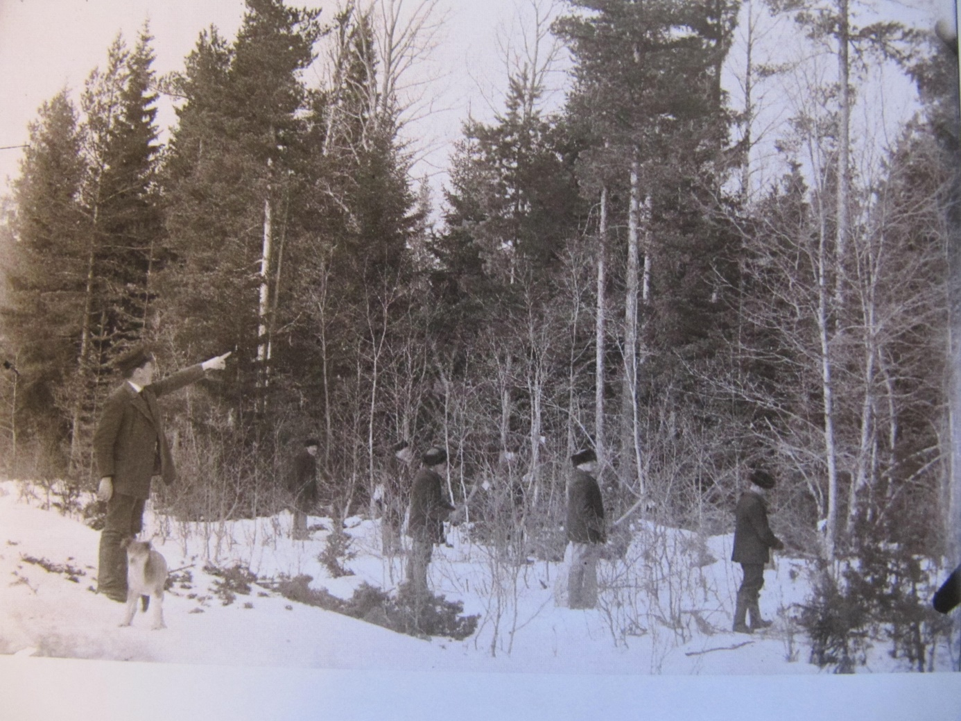 Skogsinstruktören Wikman visar kursdeltagarna hur gallringar skall göras. Det var ju denne Wikman som värderade skogarna, som skulle skiftas i storskiftet.