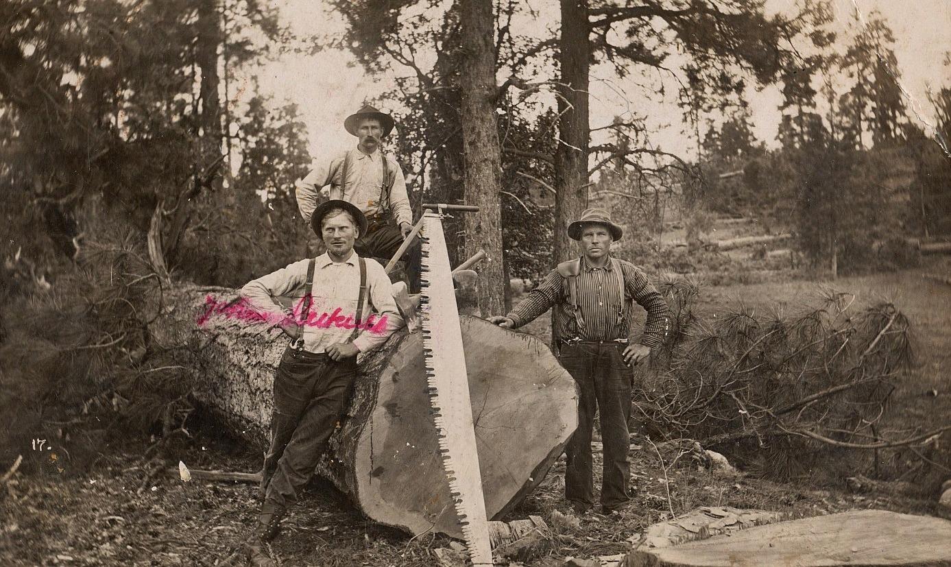 """Här visar """"Pelas-Jåhan"""" med vilken typ av såg han tillsammans med sina kamrater fällt den stora tallen. Året är 1910 då Johan vistades i Amerika."""
