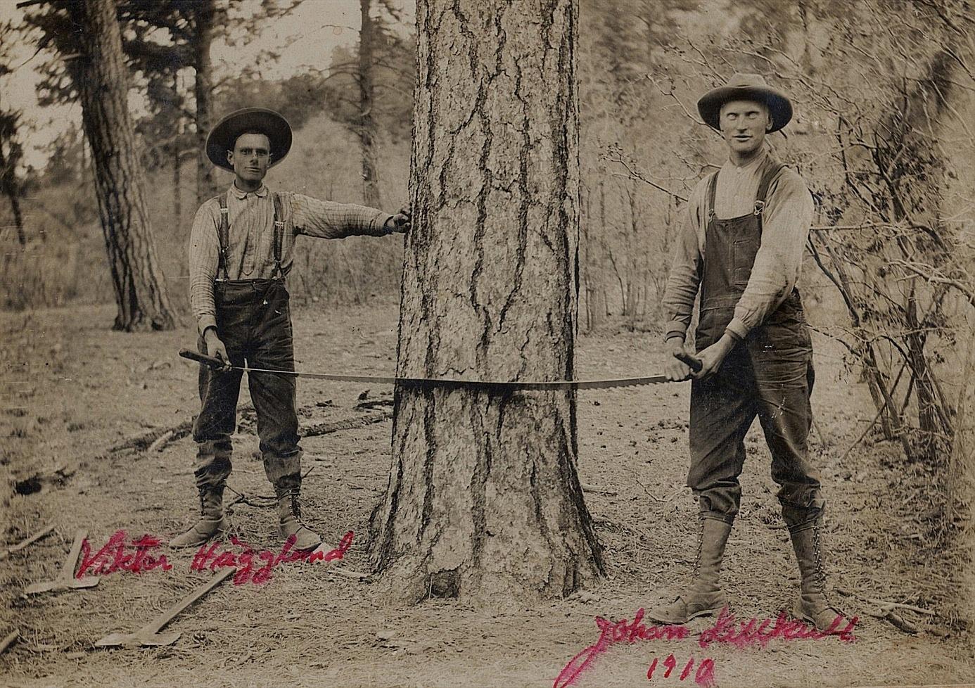 """Johan vistades i unga år i Amerika och här ser vi hur han tillsammans med """"Pala"""" Viktor Hägglund år 1910 håller på att fälla ett träd. Han var då redan far till 2 barn och det ser ut som om hustrun Ida skulle ha stannat hemma i Dagsmark under tiden."""