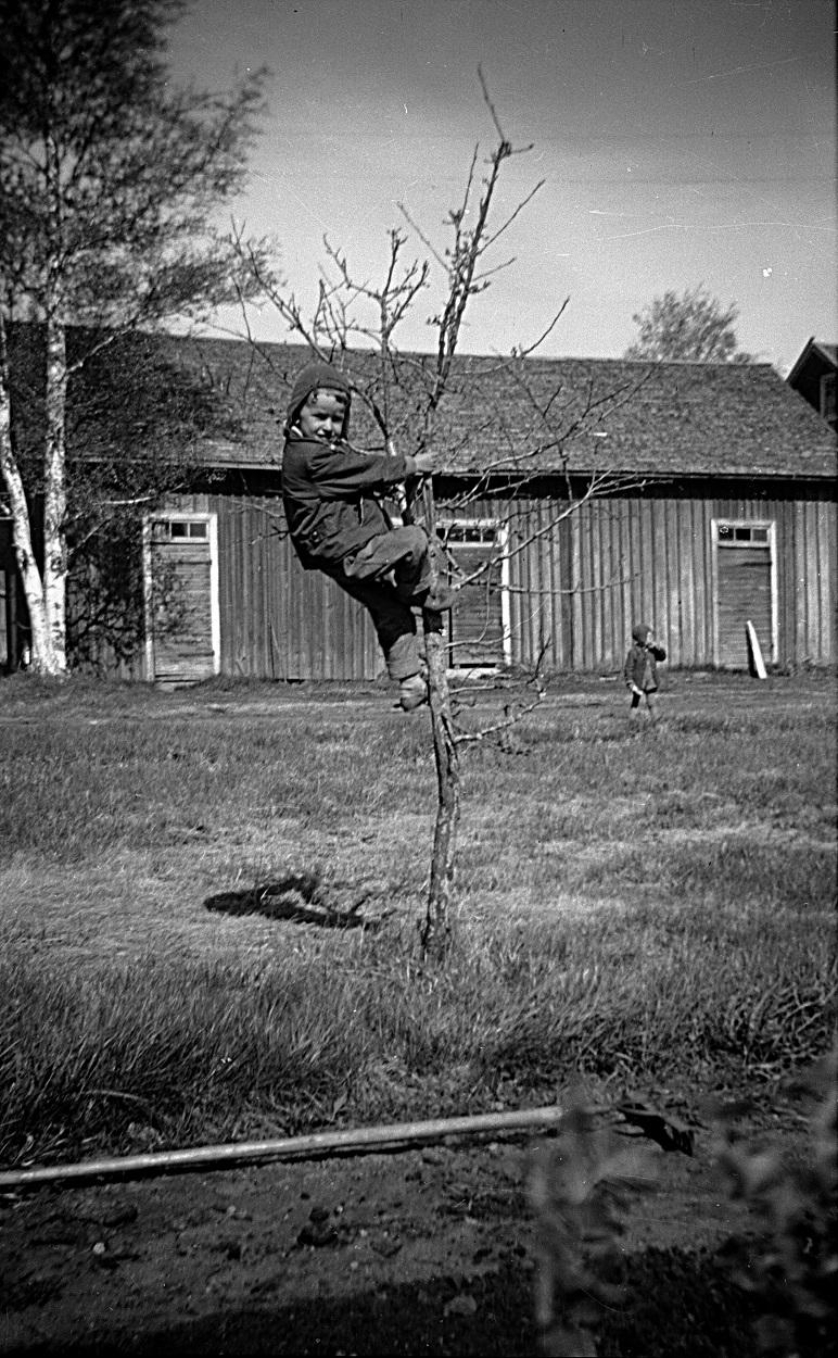 John på gården och Kurt uppe i äppelträdet på Backlundas gården.