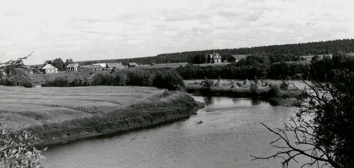 """På den här fina bilden syns en del av """"Storåkrin"""" på andra sidan ån. Mitt i ån ser vi att det har bärgats hö på Kias holmen. Gårdarna som syns i bakgrunden är från vänster Selim och Manda Lillkulls, följande är Gunnar och Guldi Lillkulls gård och nästan mitt i bild står Anselm och Elna Lillkulls gård."""