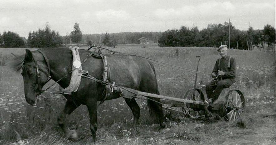 På bilden Frans Grönlund med hästdriven slåttermaskin någon gång på 1960-talet.