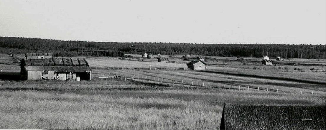Så här såg det ut på 60-talet från Dal upp mot Bymossan, det fanns många riar och lador. Mitt i bild går Sunnantillvägen kantad av gärdsgårdsstörar.