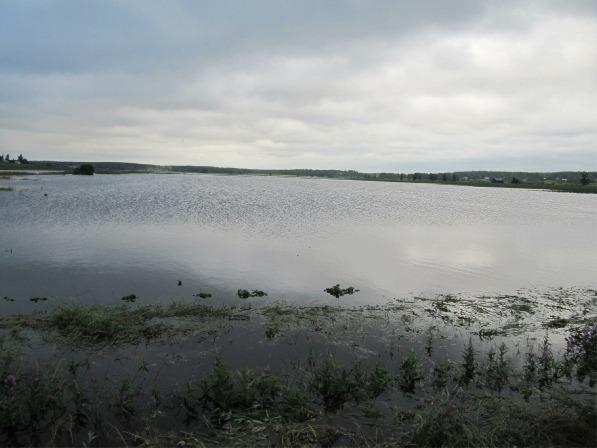 Det är inte mycket som syns av odlingarna då det gamla träsket svämmade över sommaren 2012.