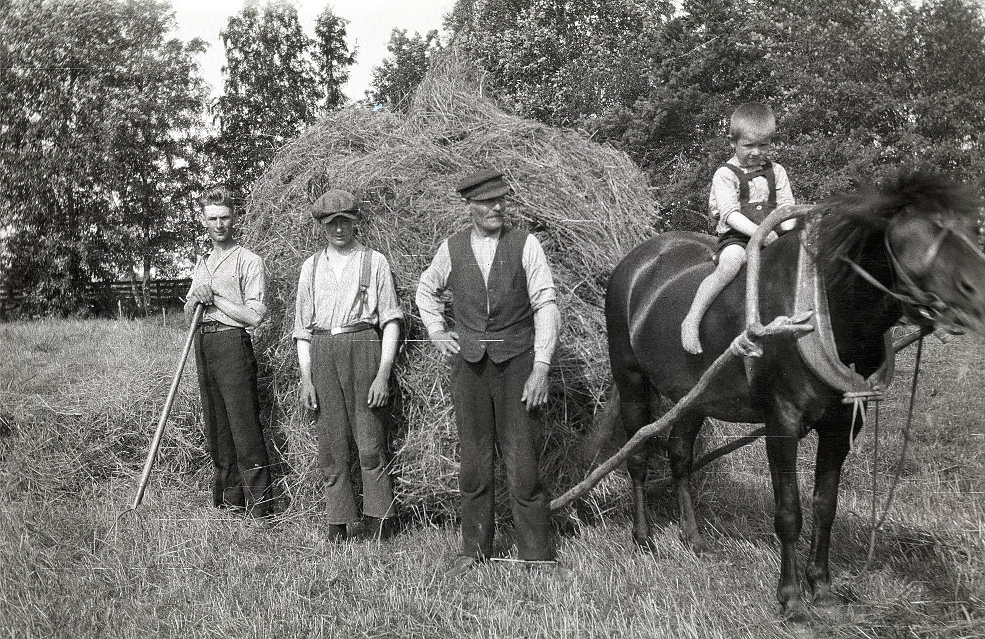 """Arvid och Lennart Björses bärgar hö med """"släpon"""" tillsammans med Erik Johan. Arvids son Alf sitter på hästen."""