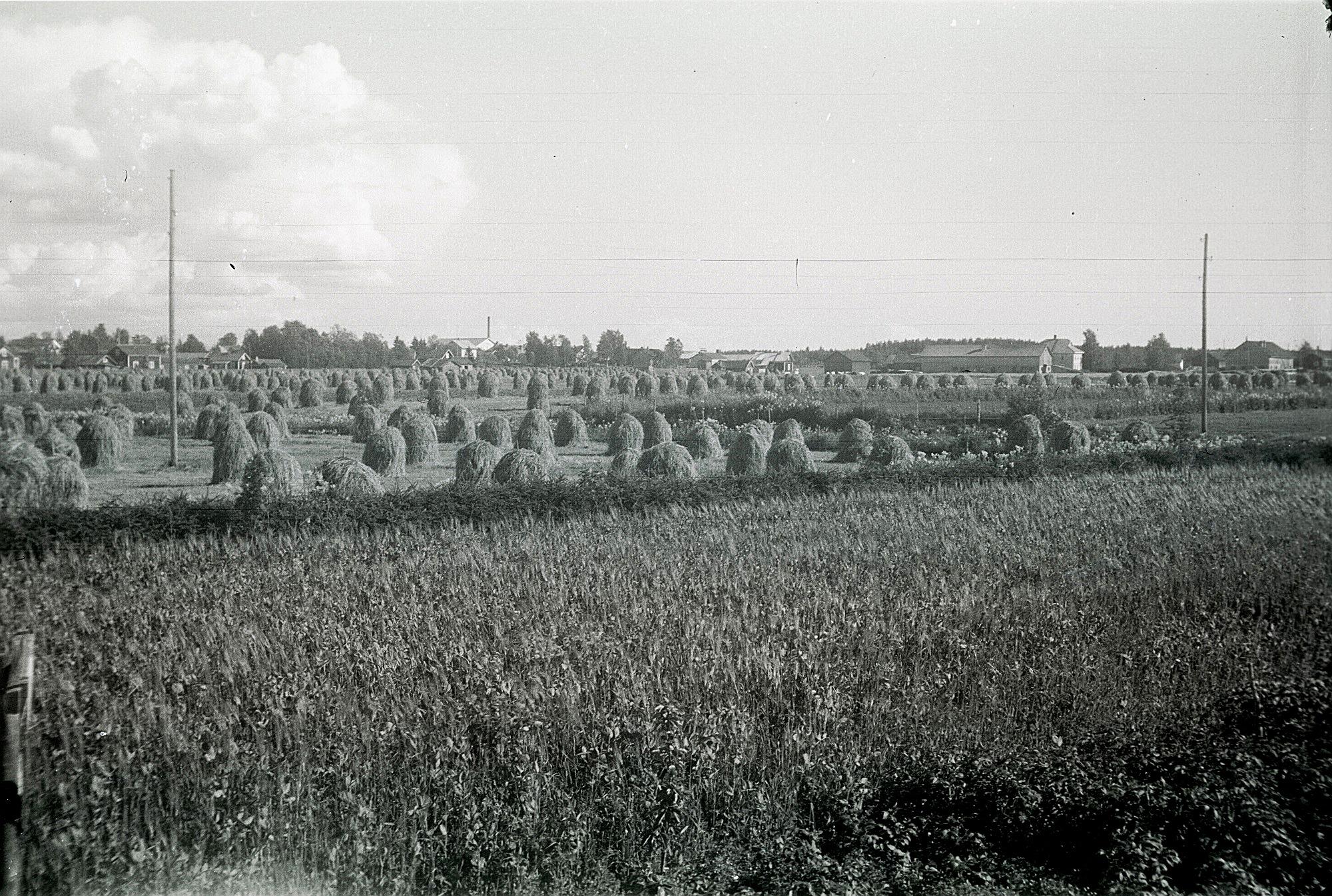 Fotot taget i skördetider år 1929 från Björses gårdarna upp mot Knusbackan. Till vänster Mitts Amandas gård, sedan Selim och Elsa Guldbergs och sedan Hulda Bergkulla. Mejeriskorstenen syns i bakgrunden.