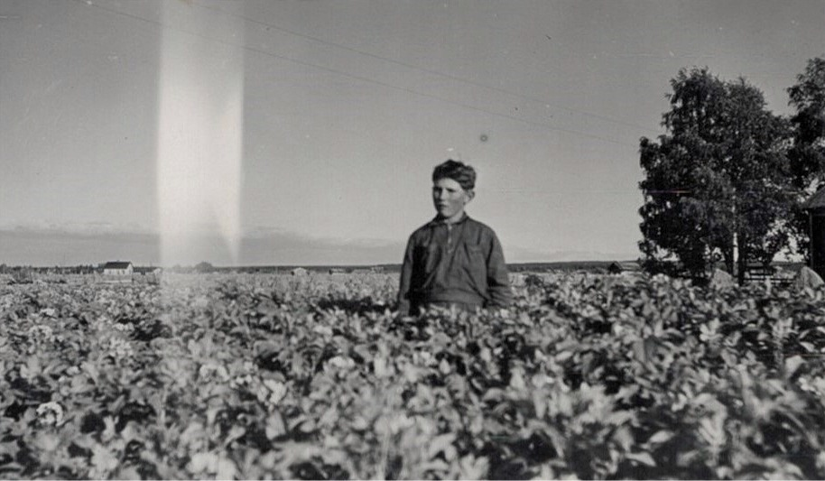 Birger Lundberg i sitt potatisland.
