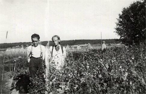 Syskonen Elgot och Karin Nygård i Korsbäck ute i trädgården, med fina rågskylar i bakgrunden.