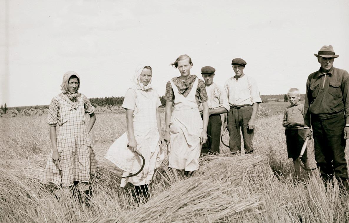 Familjen Lillsjö i färd med att skära rågen med skärorna, från vänster Astrid, f.1920, Inga, f.1915, Gurli, f.1922, Rurik, f. 1917, Ingvar, f. 1916 och Erik f. 1927. Längst till höger pappa Viktor, f. 1895.
