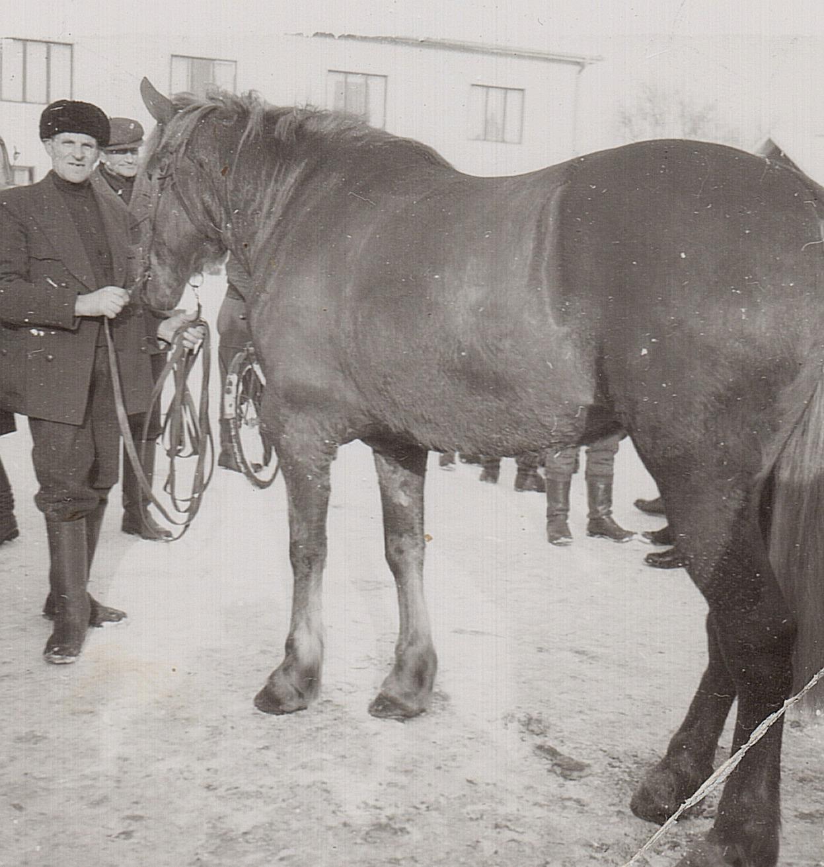 Josef Granlund var en känd hästkarl i nejden.