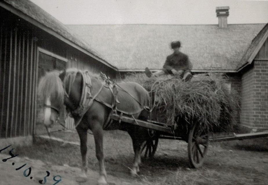 Den 14 oktober 1939 var en sorgens dag hos Englunds, då Erik Anders tvingas föra Lotta med hökärran till Lappfjärd, via tågstationen i Kristinestad mot den sovjetiska gränsen. Ryssarna var hotfulla och vinterkriget stod för dörren. Efter en tid skickades Lotta tillbaka till hemgården eftersom det visade sig att hon var dräktig. Men det betydde bara att Erik Anders måste skicka en annan häst till fronten i stället.