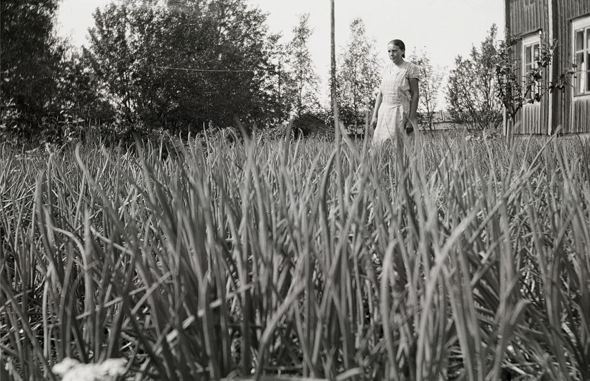 Här har fotografen Selim Björses hukat sig rejält, då han skulle fotograferna lökpiporna i Helmi Ekman lökland.