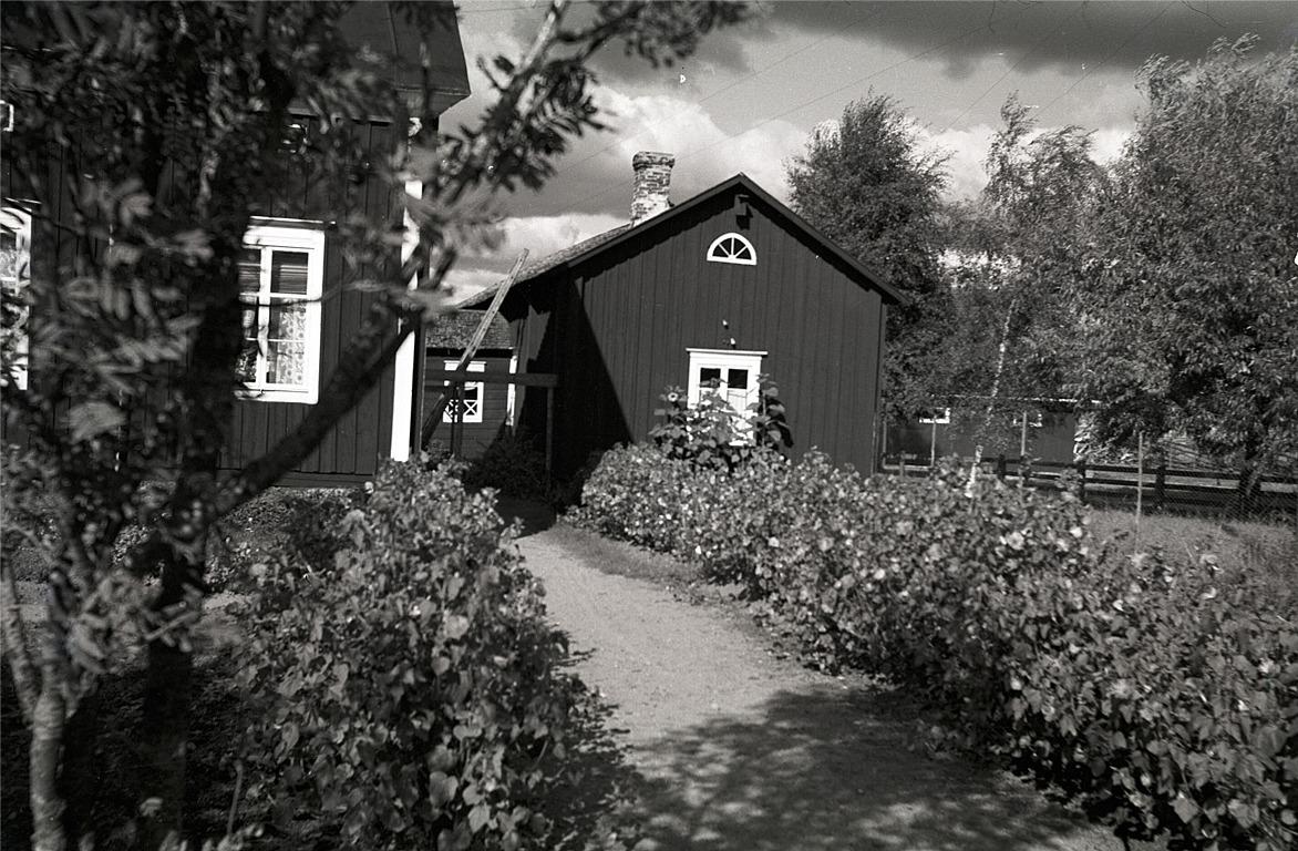 Helmi skötte om trädgården där Ekmanas på ett exemplariskt sätt.