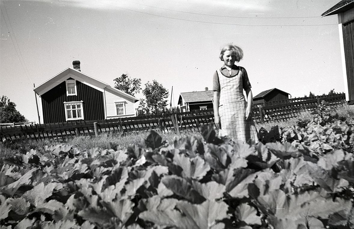 Anna Östergård i sitt kurbitsland som ser ut att ge bra skörd.