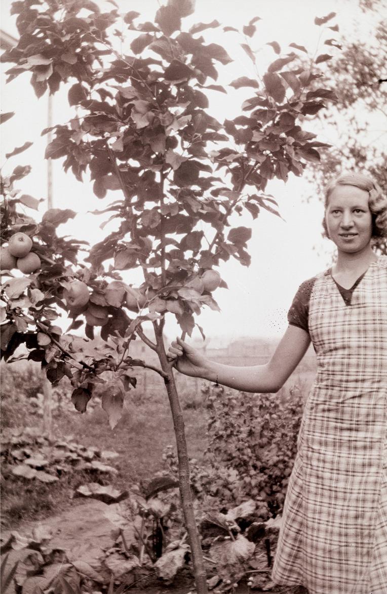 Elin Björkman visar upp ett äppelträd med riklig frukt.
