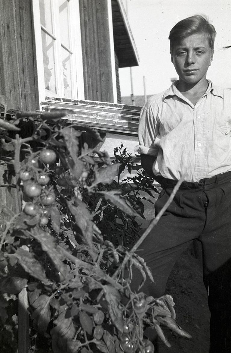En stolt Ture Nygård visar här upp de ovanliga tomaterna.