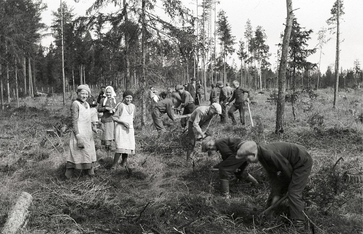 Ibland kan man undra vad som skulle hända om eleverna i dag skulle arbeta med skogsplantering på skoltid?
