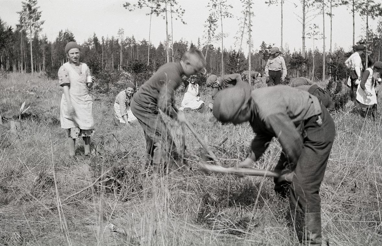 Skolans elever med i skogsplanteringen.
