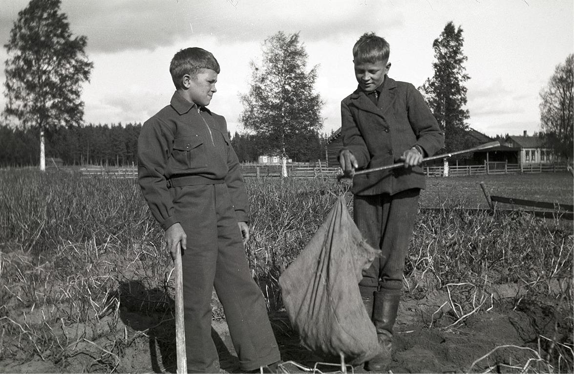 Här håller pojkarna på och väger potatisen med bessmane.