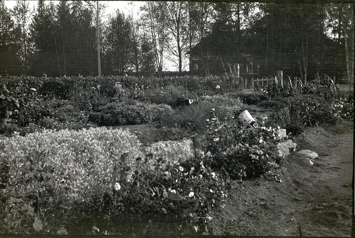 Mitt emot folkskolan i Dagsmark låg Lillsjö-bagarinas där blomsterprakten riktigt lyser. Här stod tidigare ett bageri och karamellfabrik men det brann ned 1931 och följande år dog Lillsjö-bagarin själv i en olycka i Lappfjärd. Men fortfarande är trädgården runt området välskött och blommorna pryder området som ligger centralt i Dagsmark. Bakom träden i bakgrunden syns Klemets Erik Anders gård.