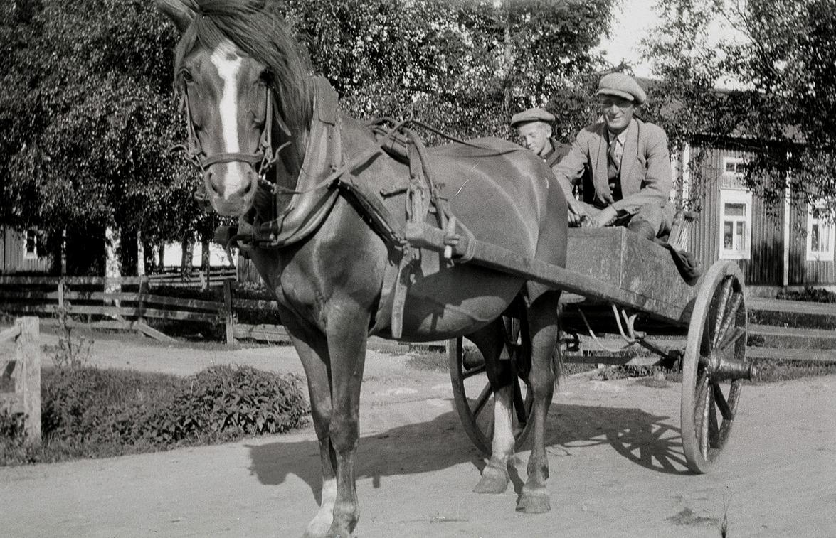 Otto Knus är ute och finkör med hästen på Holmin.