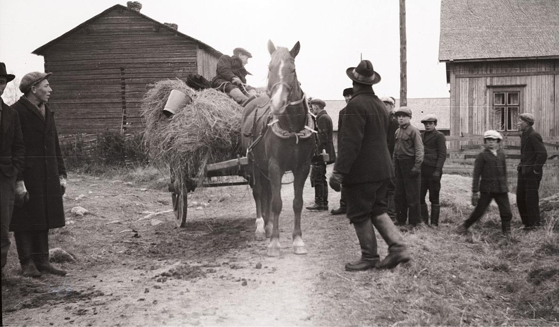 Här en häst med hökärra färdig att skickas till fronten, platsen är vid Gustas Kaalas.