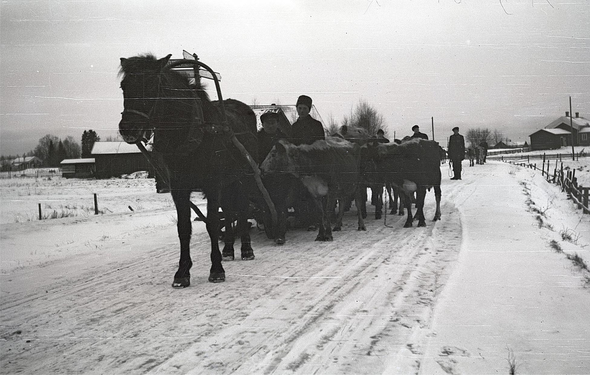 Under så gott som hela 1930-talet hade vintrarna varit så gott som snöfria och mycket milda men i december 1939 slog kölden till ordentligt med temperaturen ner mot -40 grader. I 25 graders kyla anlände dessa karelare till Lappfjärd, kommunalgården syns till höger.