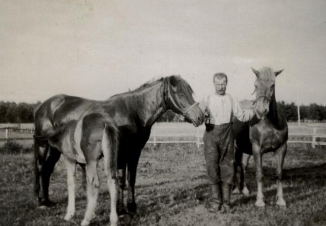 Erland Norrgård med 2 hästar och ett föl.