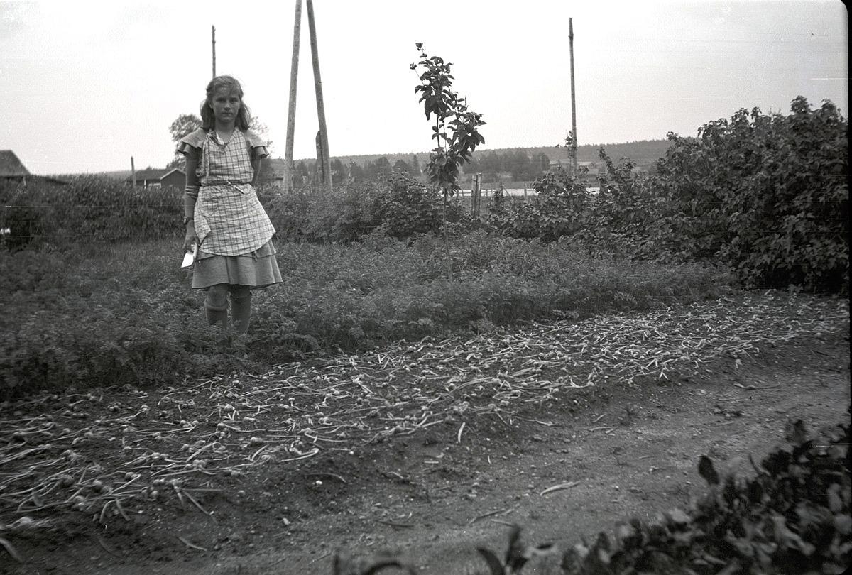 Anita Björklund visar upp lökarna som hon har skördat.