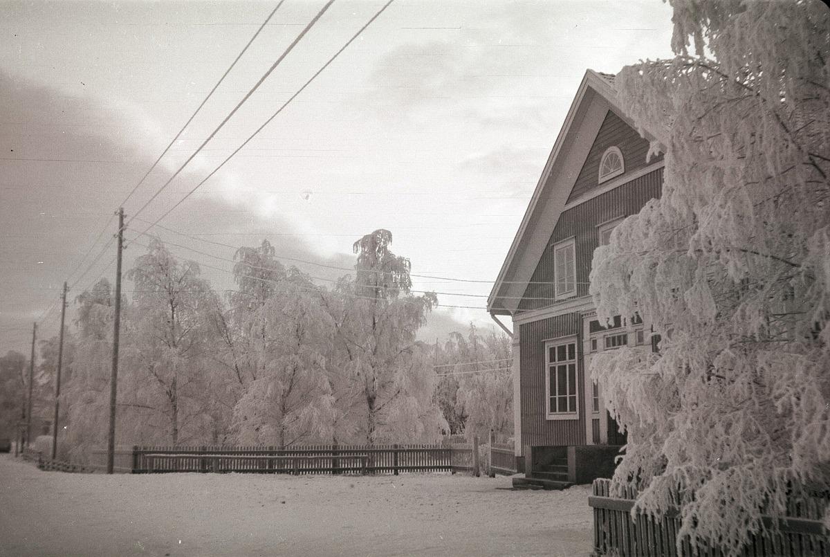 Björkarna runt Helsingforsbanken var fulla med rimfrost denna kalla vinter.