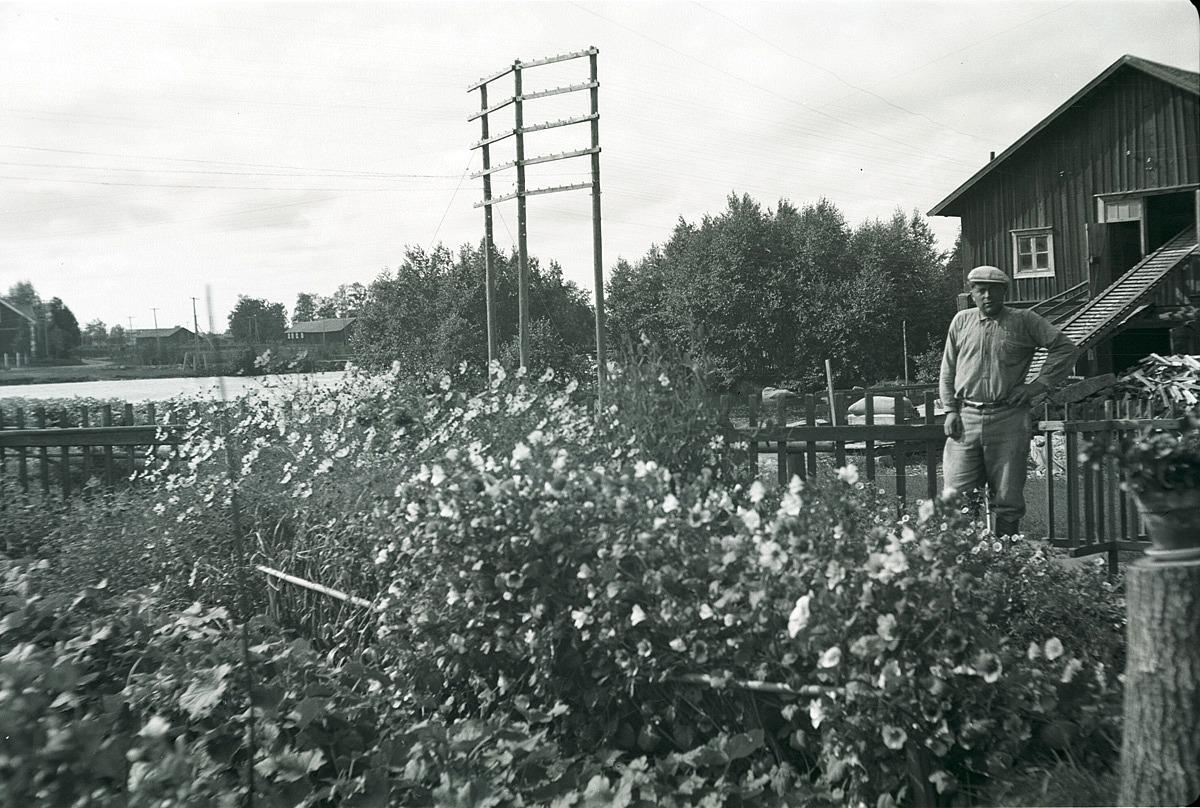 Mjölnaren Arne Engelholm där han står framför Holm kvarnen.