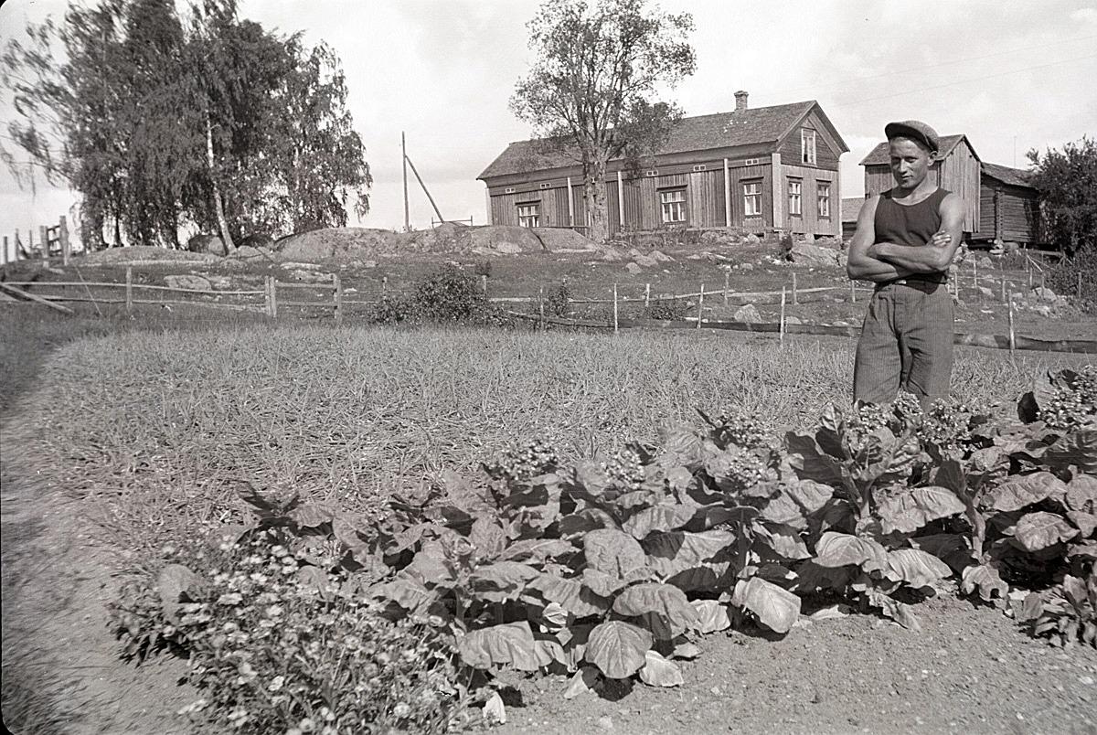Lennart Åbro i Härkmeri odlade både lök och tobak i sitt klubbland.