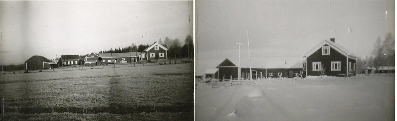 På Arvid Berglunds foton syns Lindblads nya gård med alla uthusbyggnader.
