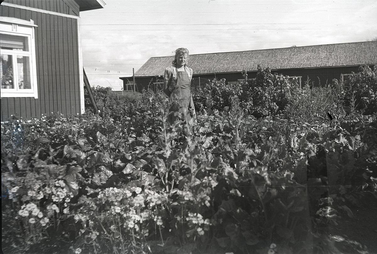 Margit Rosengård visar upp sitt välväxande trädgårdsland på Brobackan i Dagsmark.