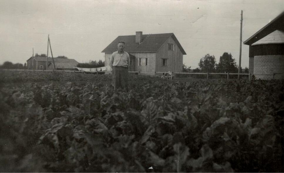 """Runar Porander i sitt sockerbetsland vid gården och med silon till höger. I bakgrunden """"Berginas flickoras""""."""