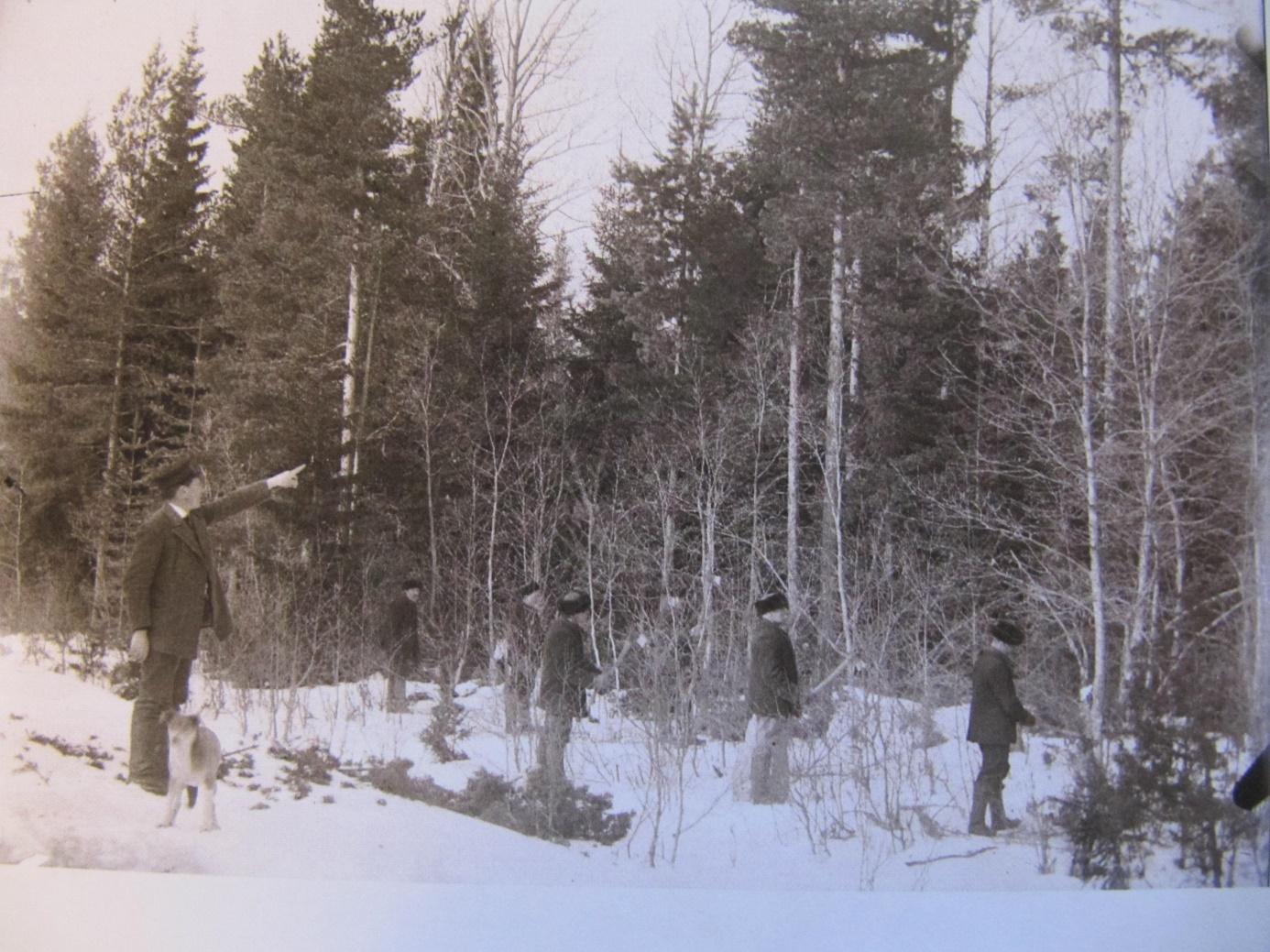 Skogsinstruktören Wikman visar kursdeltagarna på Byåsen år 1912 hur gallringar skall göras. Det var ju denne Wikman som värderade skogarna, som skulle skiftas i storskiftet.