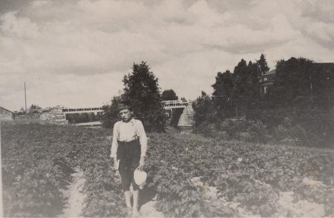 Åke Klemets i potatislandet nere vid ån, ca 1935. I bakgrunden Stora bron och Ådd-gården skymtar uppe till höger.