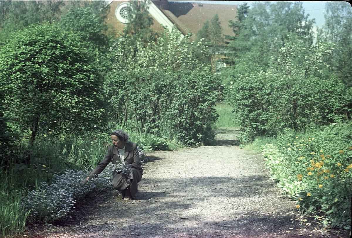 Lärarinnan Seidi Nordström på huk i blomrabatten i Selim Björses välskötta trädgård, sommaren 1957.