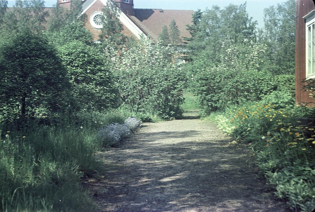 Färgfoto av trädgården utanför lärarbostaden med kyrkan i bakgrunden, året är 1957.