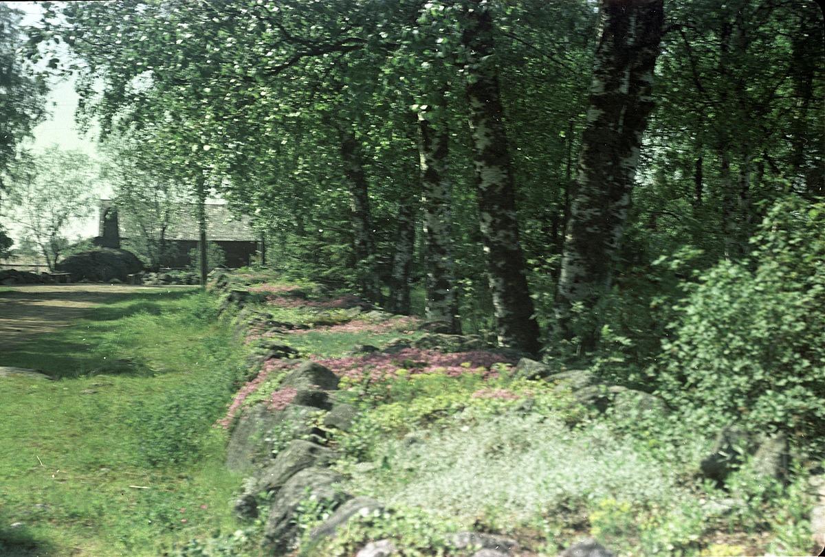 Stenmuren vid södra folkskolan, fotograferad med färgfilm 1957.