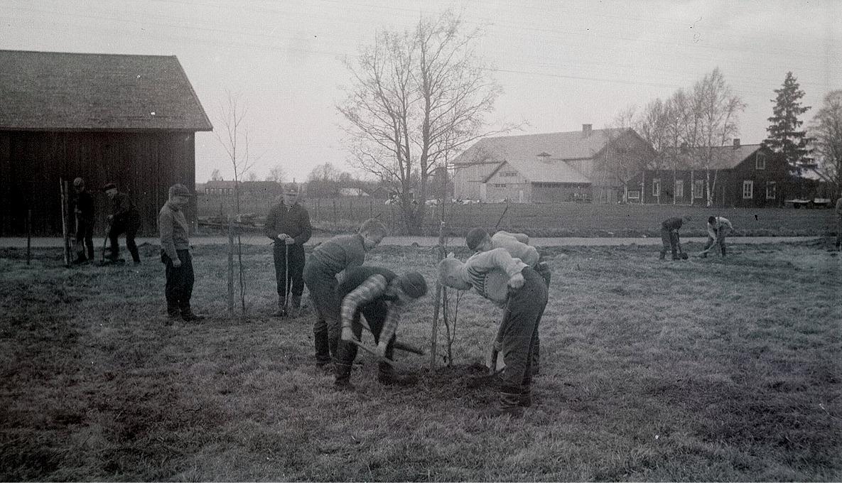 Eleverna håller på att plantera träd på Centralskolans gårdsplan. I bakgrunden till vänster Starckes ria och till höger af Hällströms nya uthusrad, som senare förstördes i en brand.