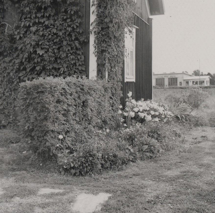 Blommor och klätterväxter i gaveln hos Rosengårds. I bakgrunden Boris Lillsjös Gulf servicestation, som byggdes 1965.