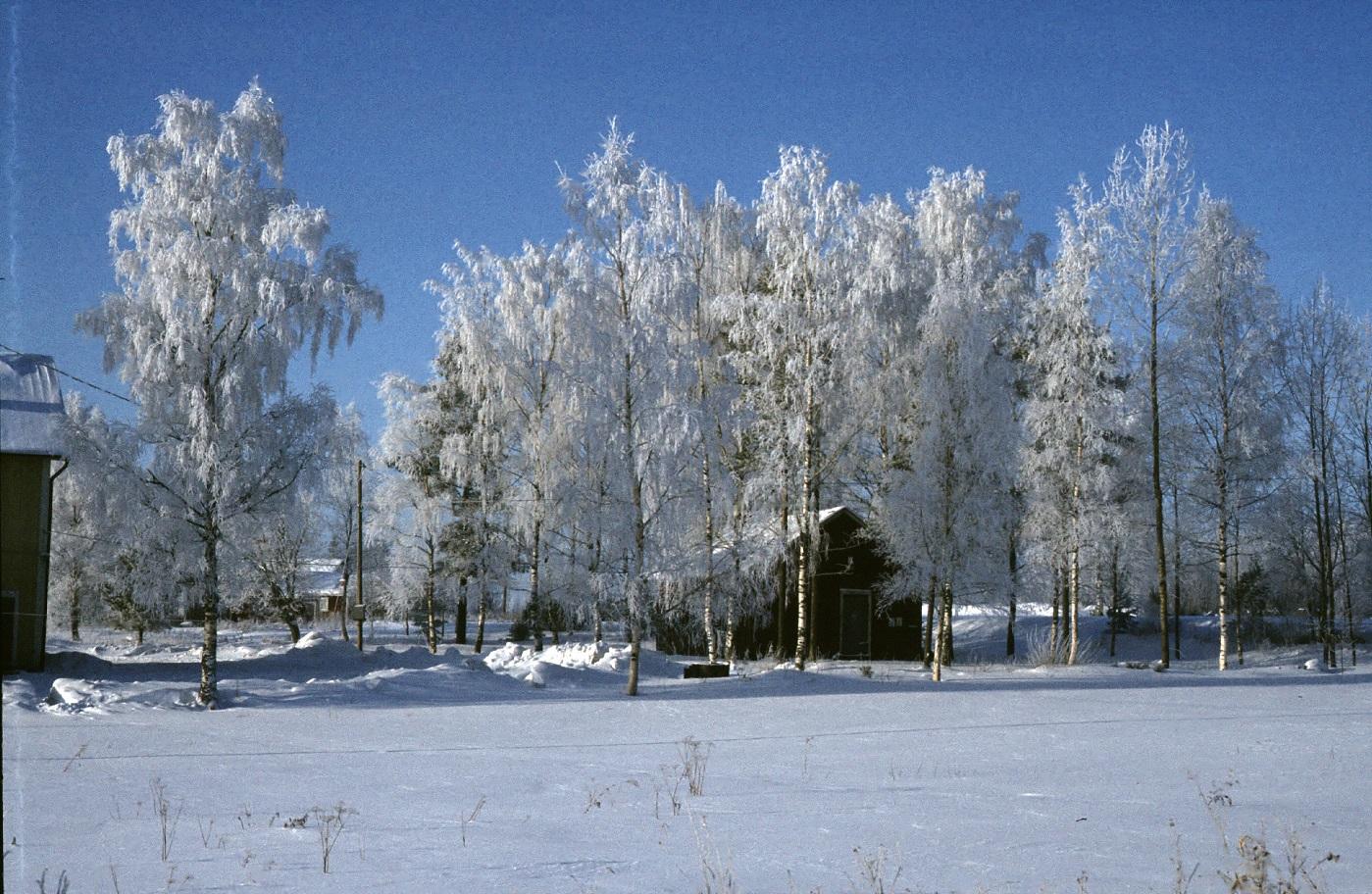 Björkarna fulla med rimfrost vintern 1985 där ungdomsföreningens uthus syns mitt i bild.